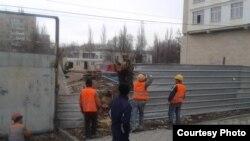 Работники компании обрубают дерево. Фото мэрии Бишкека.