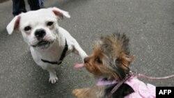 Собакам Нью-Йорка порой приходится тяжелее, чем людям