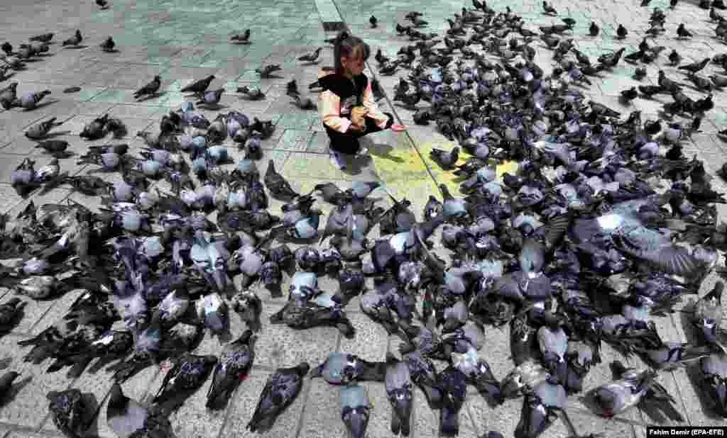 A girl feeds pigeons in Sarajevo. (epa-EFE/Fehim Demir)