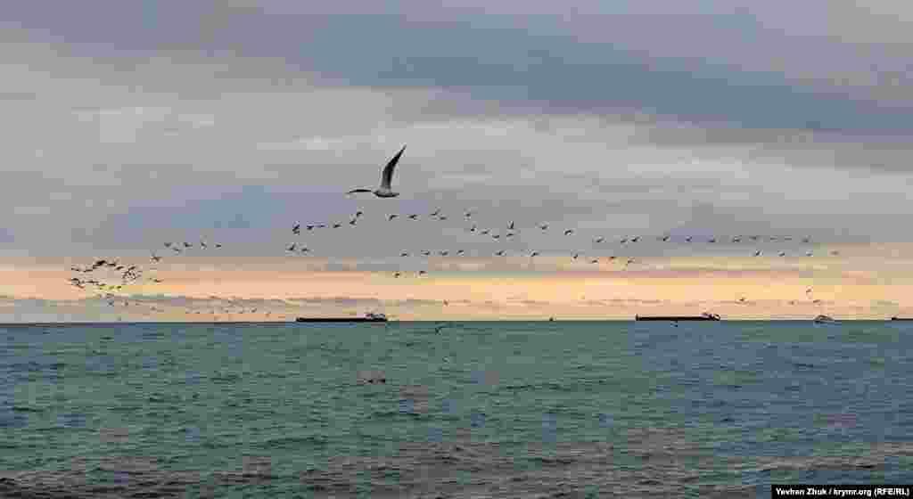 Над морем пролетает ключ диких уток