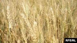 Пока не ясно, поспеют ли рекордные урожаи за растущим спросом