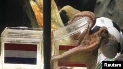 Двухлетний осьминог Пауль предсказывает победу Испании на Кубке мира-2010, аквариум Sea Life, Оберхаузен, 9 июля 2010