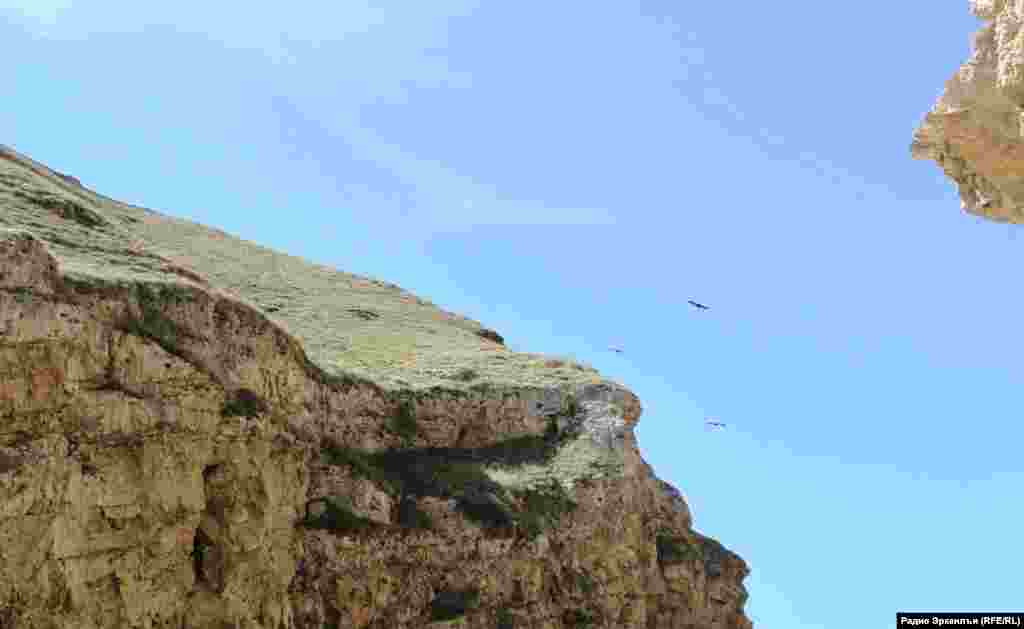 Eagles in Dagestan mountains, illustration