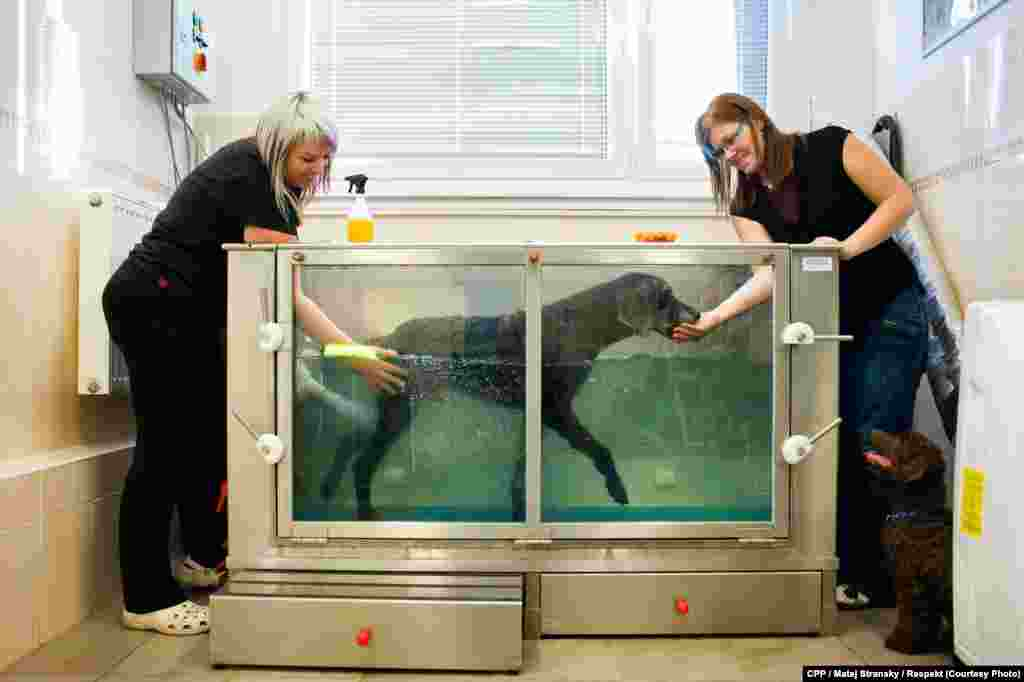 """First Prize,Nature and Environment: A dog receives aquatherapy at a veterinarian's office. (""""Respekt""""/Matej Stransky)"""
