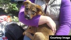 """Этого щенка спасли. Фотография из сообщества """"Забота о бездомных животных в Сочи"""""""