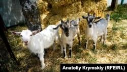 Козы в Крыму. Архивное фото