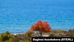 Вид на озеро Иссык-Куль в себе Бостери Иссык-Кульской области. Иллюстративное фото.