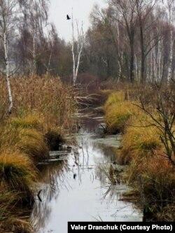 Зарослы ставок у поймавай нерушы. 7 лістапада 2017. Аўтарская хроніка