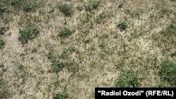 Таджикистан -- цаьпцалгийн цIоз чекхдолучу аренгахь дийна хIума ца дуьсу,10Ман2011