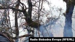 Пожарот пеплоса дел од шумата на Галичица