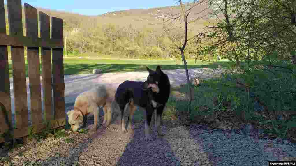 Ворота у въезда на Торопову дачу охраняют вполне миролюбивые собаки, привыкшие к толпам туристов