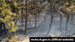 Спекотна і суха погода на більшій частині території України підвищила ризик пожеж