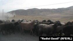 Узбекские пограничники часто задерживают граждан соседних республик, которые пасут скот на приграничной территории.
