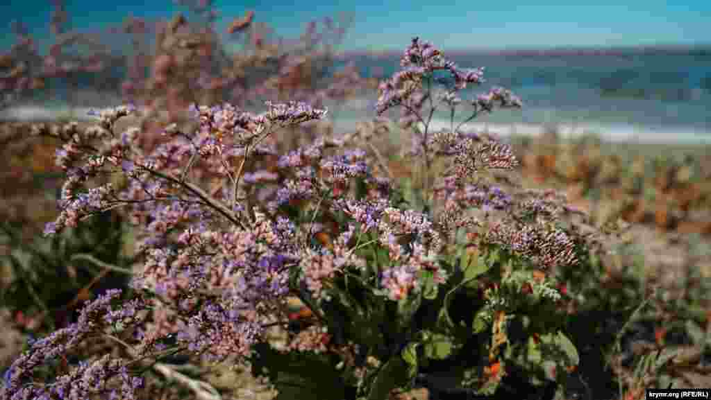 Степные цветы на берегу Тереклы