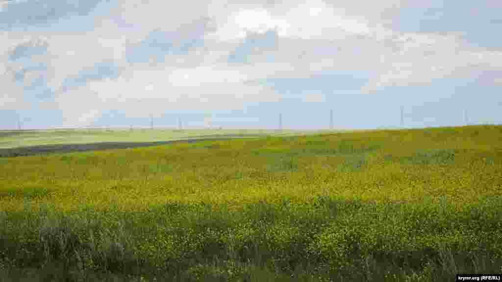 Бескрайние просторы Караларской степи овевает соленый воздух с Азовского моря. Холмы, усыпанные дикими цветами, тянутся до горизонта. Время, словно, замерло, здесь можно гулять часами и не встретить ни единой живой души. В Караларской степи нет величия Крымских гор, пафоса Южного берега Крыма, но есть свое особое, скромное очарование