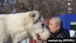 Собака породы алабай в Бишкеке. Иллюстративное фото.