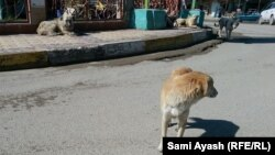 Most Russian cities have a large population of stray dogs, which sometimes roam the streets in packs. (file photo)