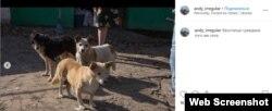 Разом із небагатьма місцевими у селі живуть собаки та коти