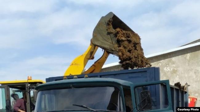 Сотрудники СЭС загружают в грузовик собранный навоз.