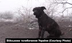 Капрал після операції, коли його знімало Військове телебачення України