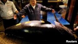 Her kilogramy 1.2 million ýene bahalanan tuna balygy Ýaponiýanyň Honşu adasynyň demirgazygynda tutuldy.