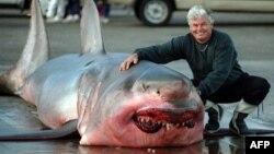 Australi -- Gary Grint pozon para peshkaqenit 5.3 metra të gjatë që ka zënë në brigjet e Perth (Ilustrim)