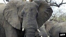 Слон в ЮАР. 30 октября 2002 года.