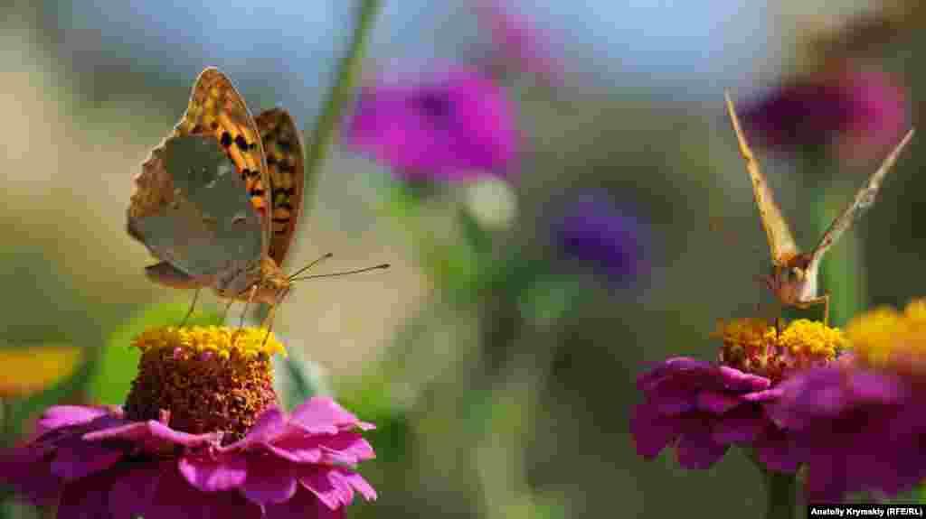 Бабочка в цветнике возле малореченской набережной
