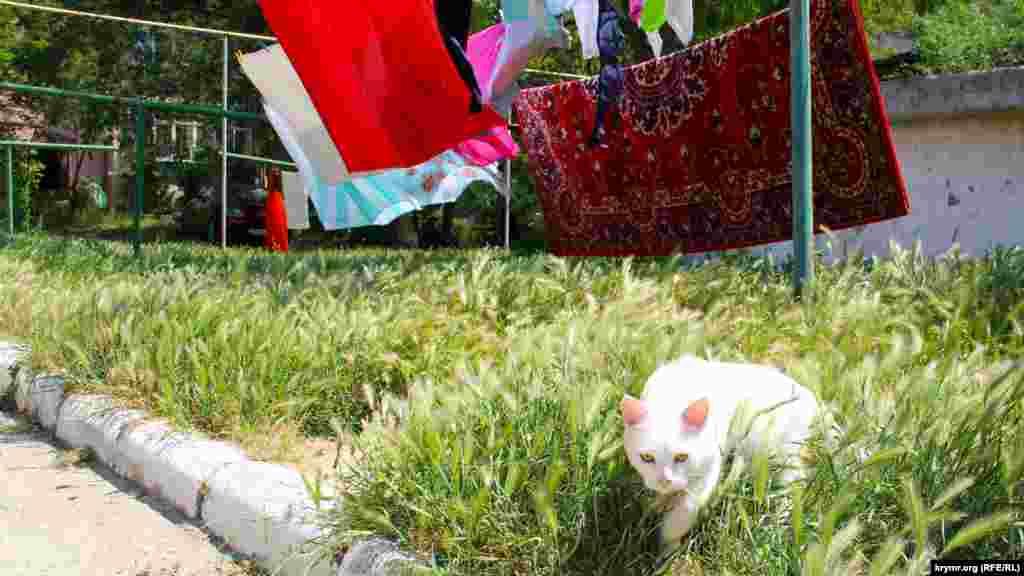 Кот-альбинос охотится на насекомых в Орджоникидзе