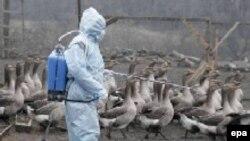 Ветеринары утверждают, что спасти птиц нет никакой возможности