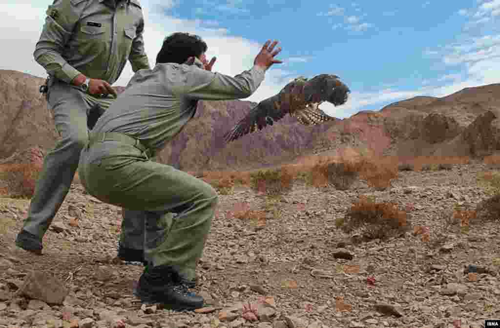 آزادسازی پرندگان شکاری؛ ماه گذشته یک محموله بزرگ قاچاق از پرندگان شکاری در استان سیستان و بلوچستان کشف شد. این پرندگان هفته گذشته با توجه به نوع اقلیم و زیستگاهشان در استانهای همجوار رها شدند. این عکس، آزادسازی پرندگان در استان کرمان را نشان میدهد.