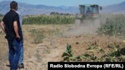 Уништување на нелегално засаден тутун.