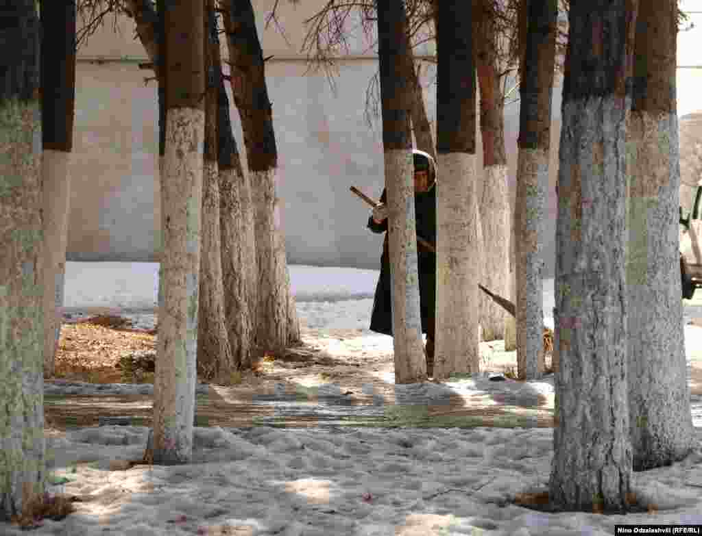 "A street cleaner sweeps between trees in the central Georgian town of Akhalkalaki. Tree trunks in Georgia are often painted white to stop ""sunscald"" caused by trees being warmed by the sun, then frozen overnight."