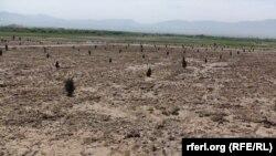 شریف: روشن گردید که ۱۴۳ جریب زمین بدون داوطلبی داده شدهاست.