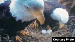 Птицы не обращали на веб-камеру никакого внимания