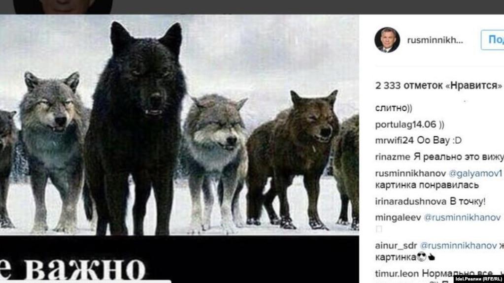 картинки с надписями с волками