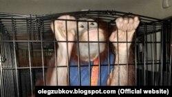 Орангутан Дана