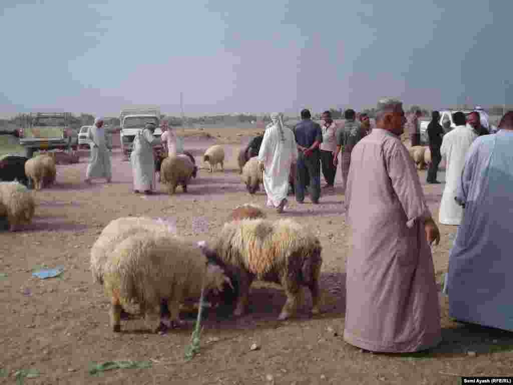 People at a market in Diyala, Iraq, look to buy sacrificial animals for the Eid festival.