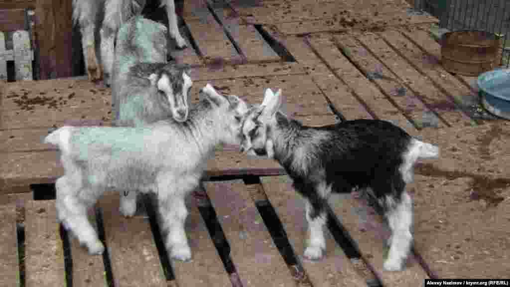 Трое козлят