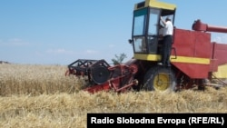 Macedonia -- A field of wheat harvested in Pelagonia, July 11, 2013.