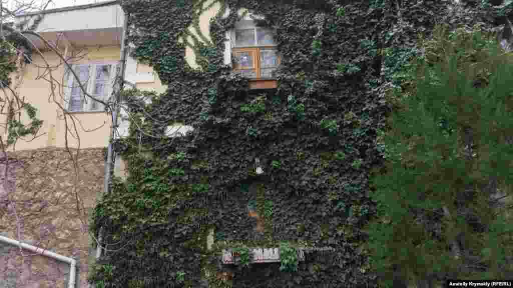 «Експансія» плюща на вулиці Батурина
