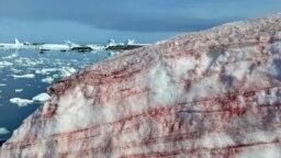 «برف هندوانهای» در اطراف پایگاه تحقیقاتی ورنادسکی اوکراین در جزیره گالیندز، در ساحل شمالیترین شبه جزیره جنوبگان