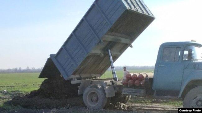 Коровий навоз, собранный сотрудниками СЭС, выгружают в поле.