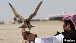 Катардағы сұңқармен аң аулау фестивалі. 29 қаңтар 2016 жыл (Көрнекі сурет).