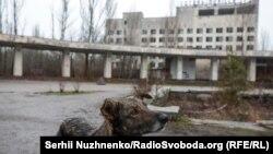 Пес позує на тлі центральної площі міста Прип'ять
