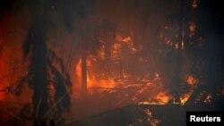 Лісова пожежа в Хайфа, Ізраїль, 24 листопада 2016 року