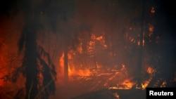 Incendiile în zona orașului Haifa