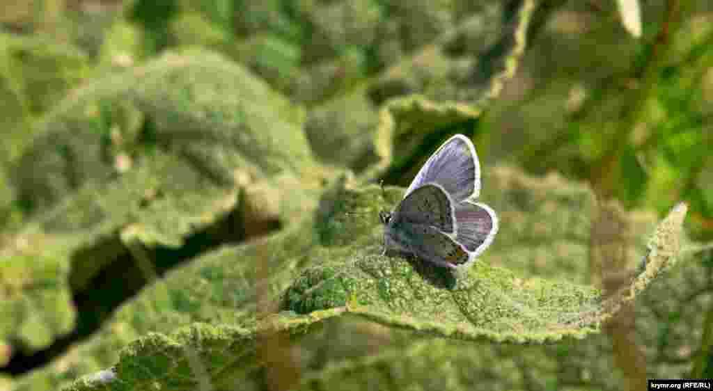Бабочка близ пруда