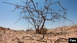 گزارشهای مختلف از نابودی سفرههای آب زیرزمینی و «خشکسالی هیدرولوژیکی» حکایت دارد