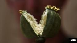 Атлас мира: 7 миллиардов в опиумную трубу